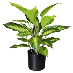 Umelá Rastlina Difenbachia, 45cm